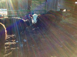 CasaCano Farms Grass Fed Beef